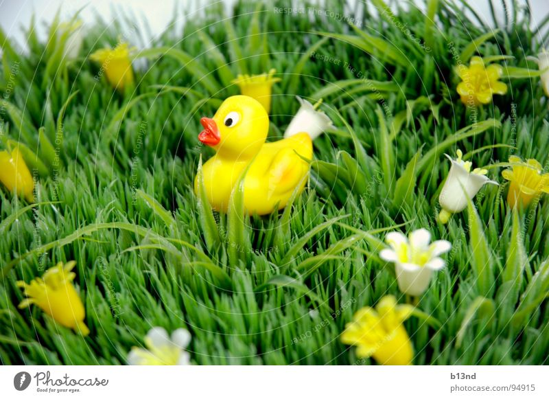 Quietschi on travels Meadow Grass Flower Blossom Squeak duck Beak Green White Yellow Still Life Spring Lawn Duck Plant Statue Plastic Placed Kitsch