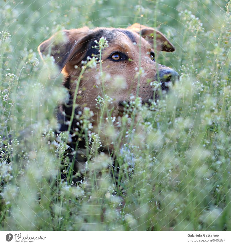 Dog Nature Plant Beautiful Green Animal Eyes Brown Observe Hide Pet Foliage plant