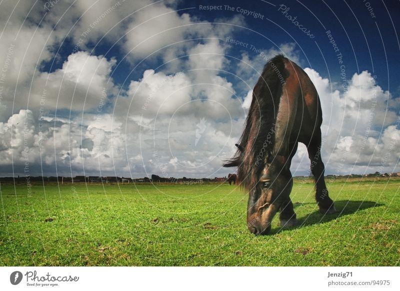 Sky Clouds Meadow Grass Weather Horse Island Pasture Mammal North Langeoog