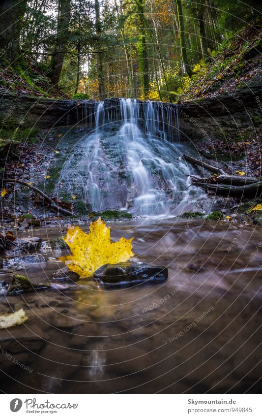 Maple leaf in front of waterfall Nature Landscape Plant Animal Earth Water Drops of water Autumn Beautiful weather Tree Moss Leaf Forest Virgin forest Rock