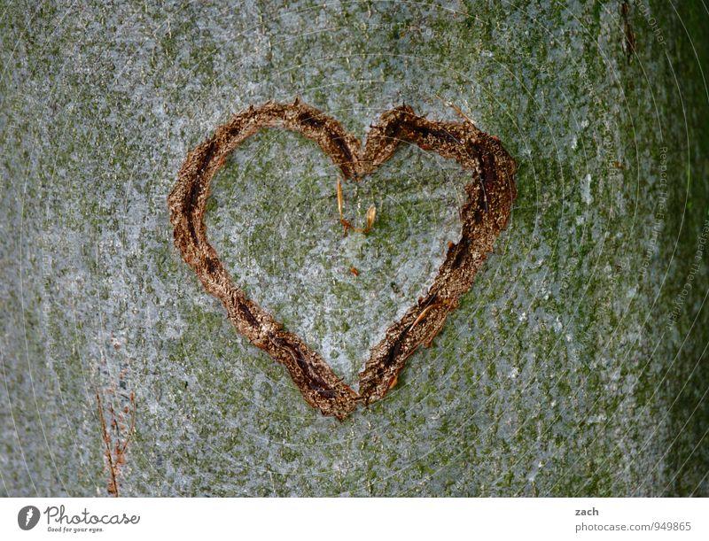 donor organ Valentine's Day Wedding Plant Tree Tree trunk Tree bark Wood Sign Ornament Heart Love Kitsch Gray Emotions Happy Sympathy Infatuation Romance