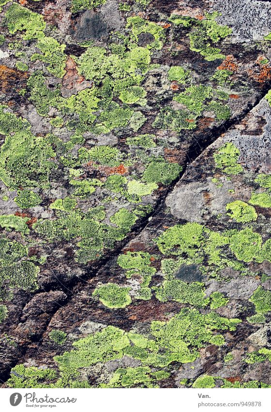 Divided Personality Nature Autumn Moss Lichen Rock Stone Gray Green Column Furrow Colour photo Multicoloured Exterior shot Detail Structures and shapes Deserted