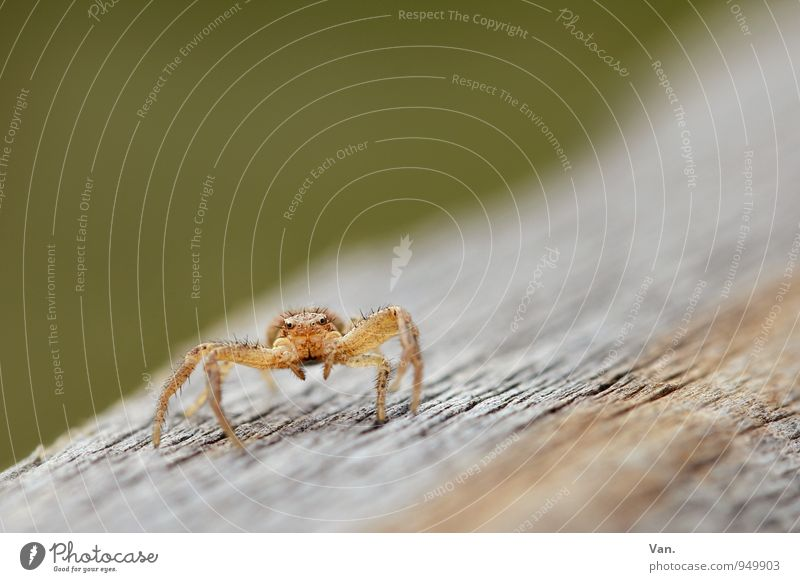 Dance? Nature Animal Wild animal Spider 1 Wood Crawl Small Orange Colour photo Multicoloured Exterior shot Macro (Extreme close-up) Deserted Copy Space top Day