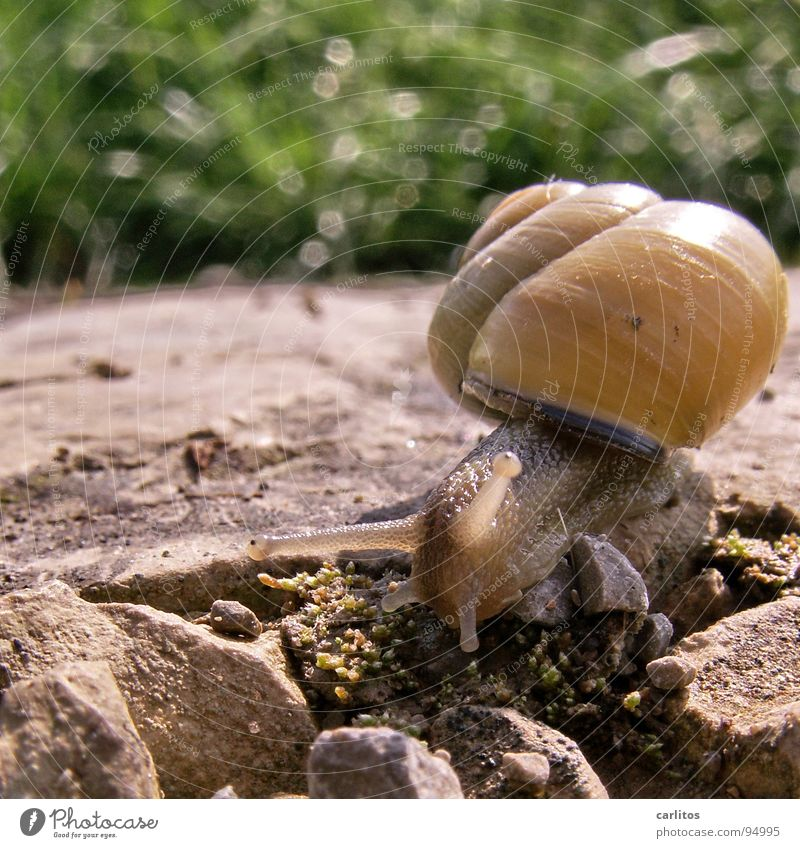 Well, snail, the two of us. Snail shell Feeler Mucus Green Crawl Slow motion Hybrid Food Animal Smoothness Gain favor Skid House (Residential Structure) Speed