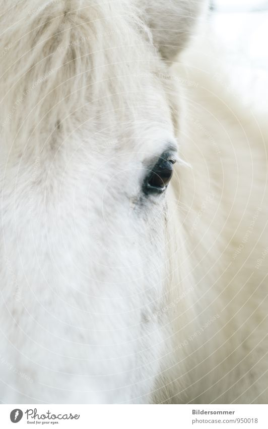 eye to eye Animal Farm animal Horse Animal face Pelt 1 Observe Looking Natural Soft Black White Love of animals Loyalty Watchfulness Relationship Power Nature