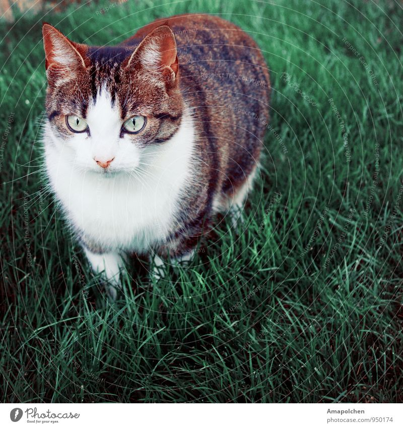 Cat Nature Summer Landscape Animal Environment Spring Meadow Grass Garden Park Curiosity Hunting Pet Animal face Interest