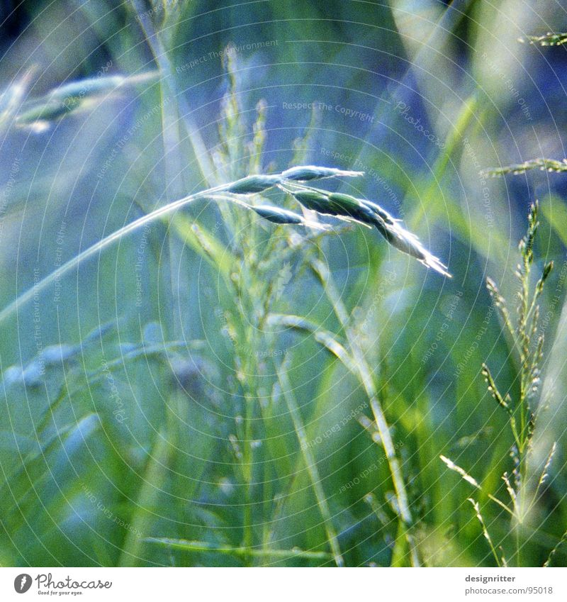 Green Summer Meadow Grass Bright Delicate Easy Blade of grass Fragile Delicate