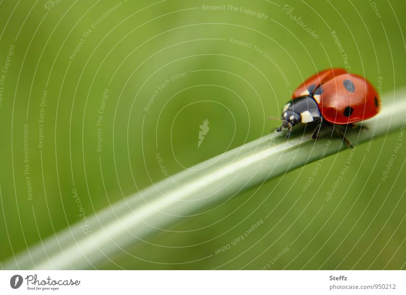 Nature Green Summer Red Grass Happy Birthday Card In transit Crawl Spotted Beetle Ladybird Congratulations Good luck charm Summer feeling