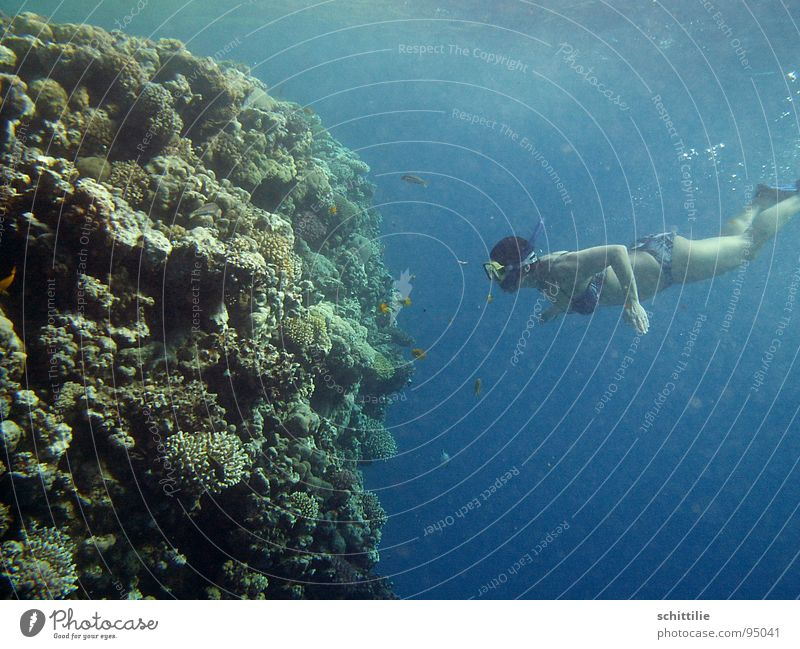 am_Riff Diver Woman Green Coral Sports Leisure and hobbies Water crickets Blue Stone Fish Water wings Deep Pressure