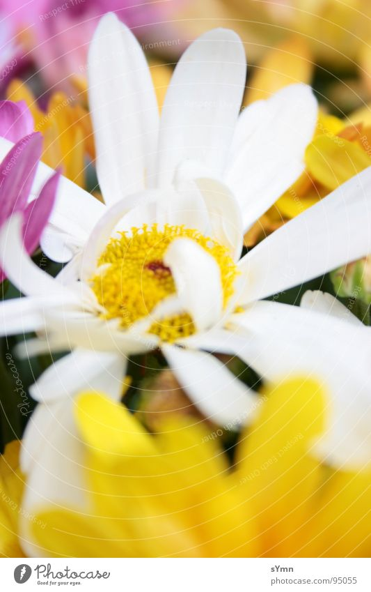 flowerpower Flower Multicoloured White Yellow Pink Spring Summer Winter Autumn Happiness Blur Blossom Green Bee Beehive Honey Sprinkle Mixture Afternoon Park
