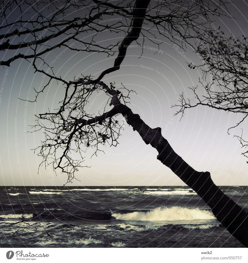 Good morning, Baltic Sea Environment Nature Landscape Water Cloudless sky Horizon Climate Beautiful weather Wind Tree Wild plant Branch Twigs and branches Waves