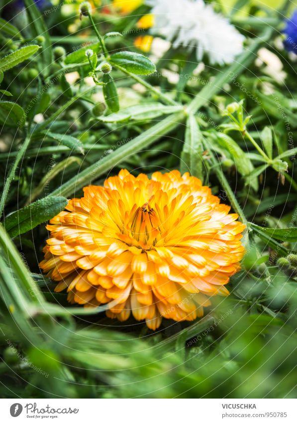 Nature Plant Summer Flower Yellow Meadow Style Garden Park Leisure and hobbies Decoration Design Bouquet Alternative medicine Medicinal plant Spa
