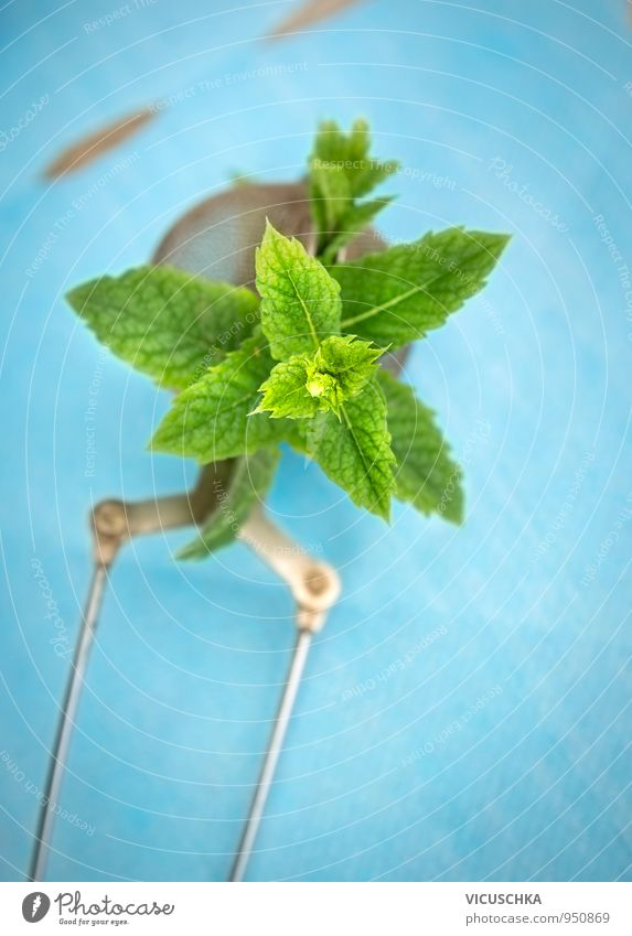 Nature Relaxation Background picture Lifestyle Food Design Table Herbs and spices Organic produce Tea Mint Mint green Sieve Peppermint tea