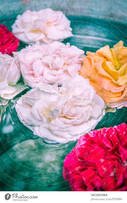 Rose flowers in water Style Design Leisure and hobbies Garden Decoration Nature Plant Water Flower Pink Red Yellow Multicoloured Exterior shot Colour photo