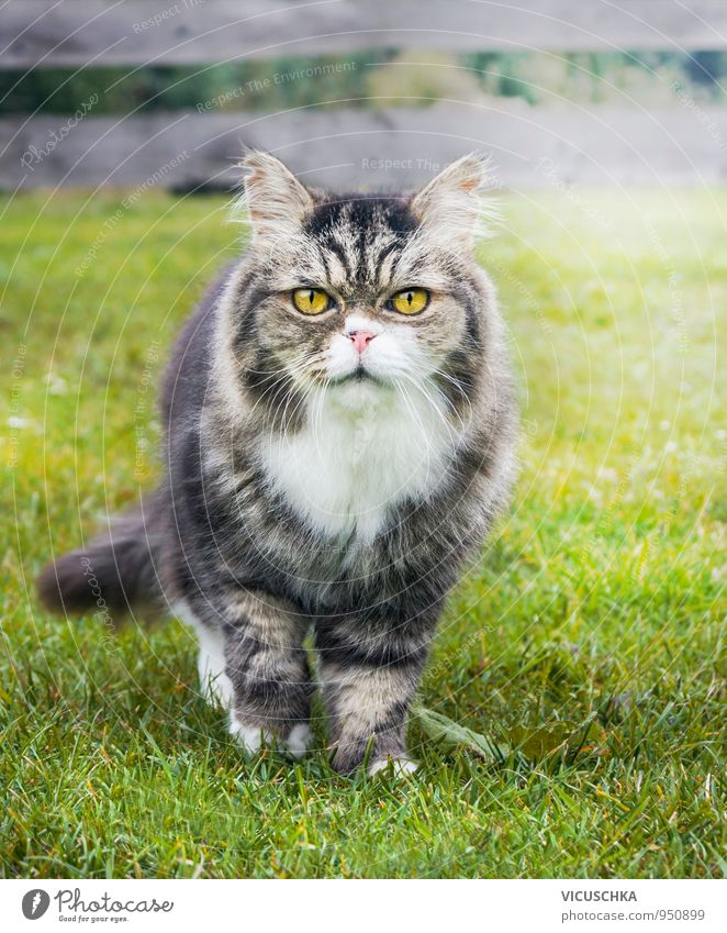 old cat in the garden on the grass Lifestyle Leisure and hobbies Summer Garden Nature Autumn Park Animal Cat 1 Yellow Free-roaming Grass Old To go for a walk
