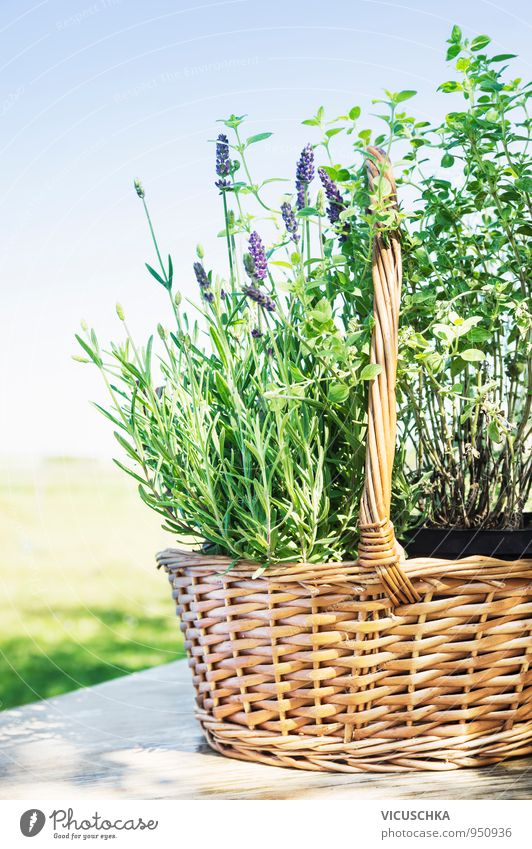 Lavender basket on garden table Lifestyle Style Design Spa Summer Garden Nature Plant Spring Foliage plant Bouquet Background picture Provence Aromatic Basket