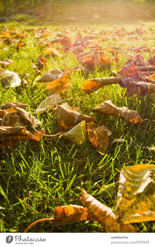 Nature Sun Tree Leaf Autumn Meadow Grass Garden Bright Lie Weather Climate Copy Space To fall Lawn Garden plot