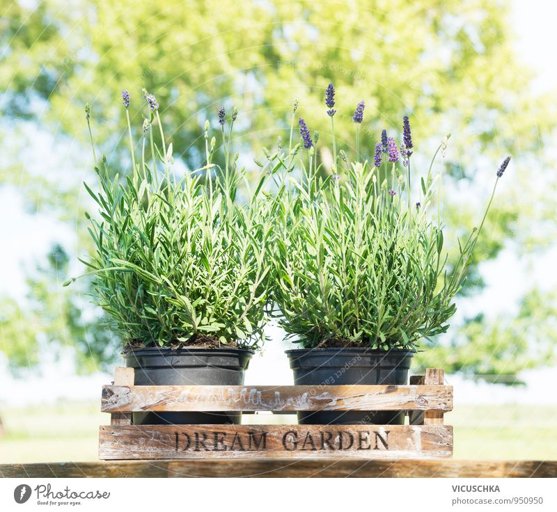 Nature Plant Summer Tree Flower Spring Garden Design Decoration Table Herbs and spices Bouquet Fragrance Medication Crate Container