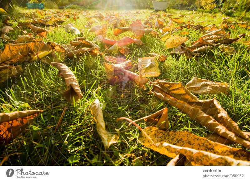 Autumn in the garden Garden Garden plot Climate Leaf Autumn leaves Nature October November Weather Sun Light Bright Grass Lawn Meadow Tree Cherry tree