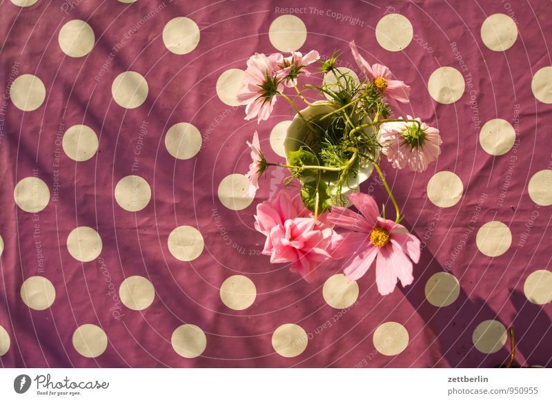 dots vs. flowers Table Tablecloth Design Pattern Point Flower Flower vase Vase Bird's-eye view Blossom Decoration Copy Space Tilt Violet Blossom leave Bouquet