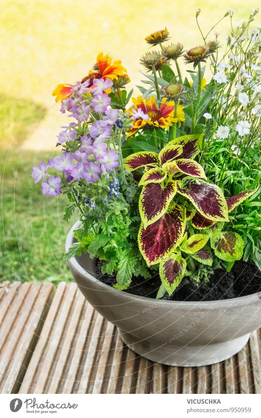 Pot with flowers on the terrace in the garden Lifestyle Leisure and hobbies Summer Garden Decoration Nature Plant Earth Sunlight Spring Autumn Beautiful weather