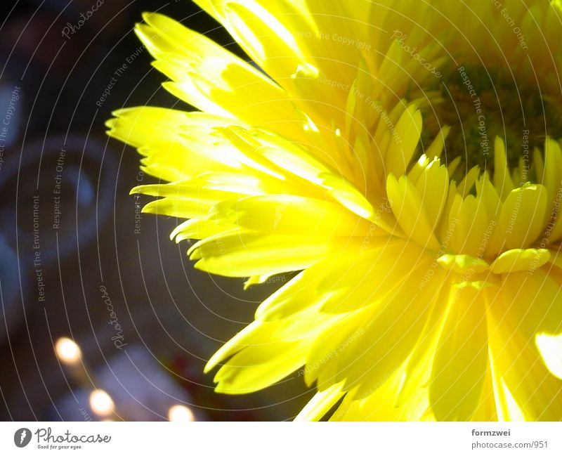 flower Flower Yellow Things