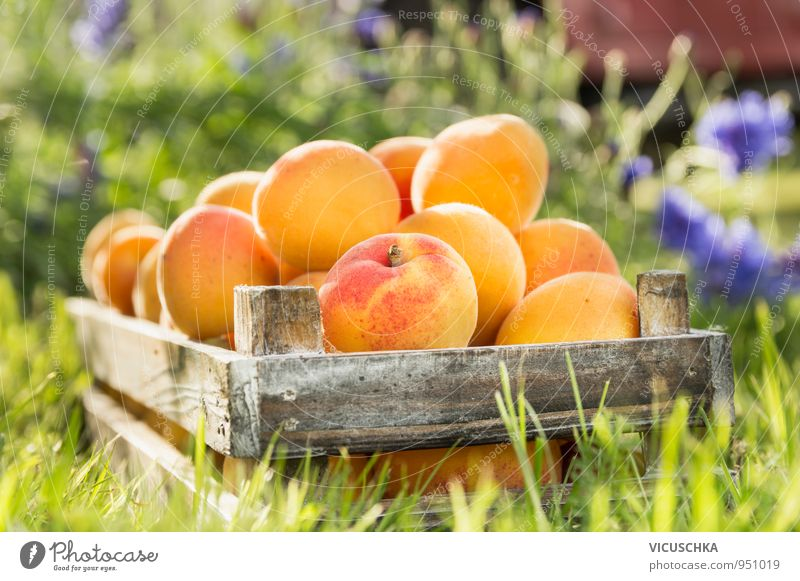 Old wooden box with apricots in the garden Food Fruit Organic produce Vegetarian diet Diet Juice Lifestyle Healthy Eating Summer Garden Nature Yellow Style
