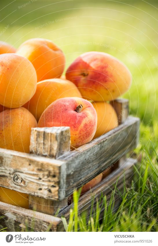 Apricots in old wooden box on the lawn Food Fruit Organic produce Vegetarian diet Diet Juice Lifestyle Summer Nature Yellow Snack Gourmet garden Harvest Crate