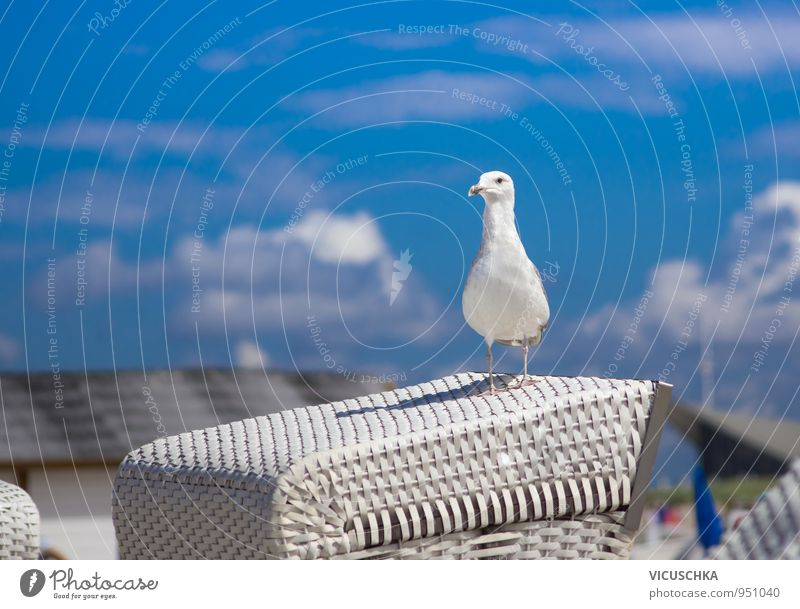 Seagull on white beach chair Lifestyle Vacation & Travel Summer Beach Nature Sky Clouds Spring North Sea Baltic Sea Lake Animal Bird 1 Design Black-headed gull