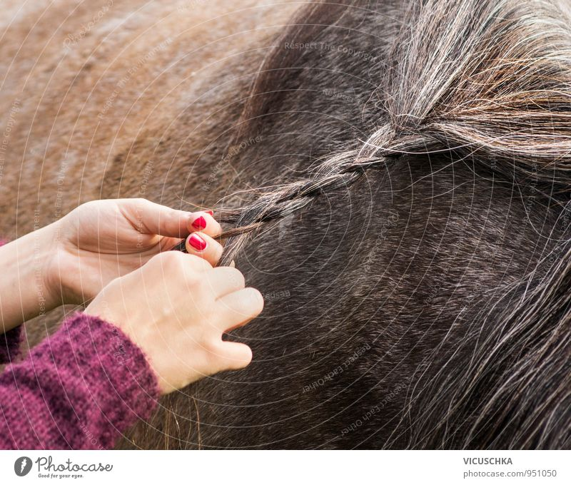 mane braiding Lifestyle Leisure and hobbies Summer Human being Woman Adults Hand Nature Animal Horse Idyll Mane Bond Braids Hair and hairstyles Brown Ride