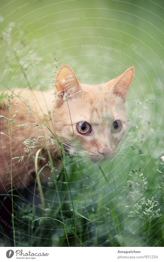 ::14-40:: Environment Nature Landscape Plant Grass Bushes Garden Park Meadow Animal Pet Cat Animal face Baby animal Catch Dream Hunter Hunting Creep Tabby cat