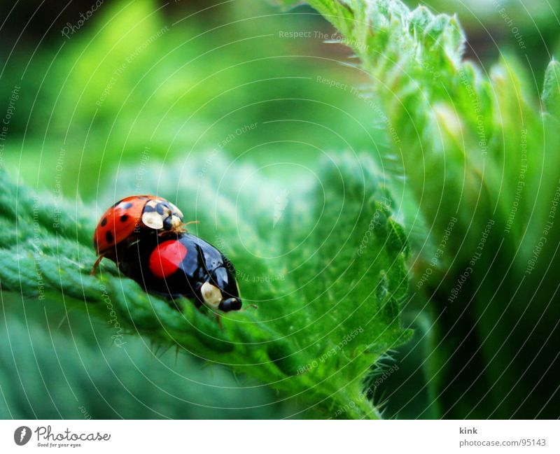 Ladybirds have also sometimes desire Bow Animal Macro (Extreme close-up) Close-up Nature Beetle ladybug