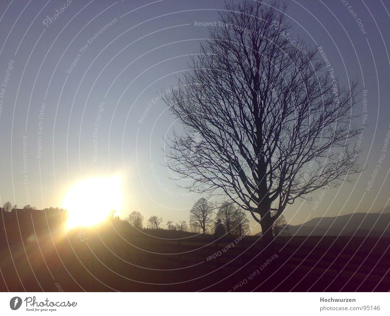 Sky Sun Tree Cold Autumn Treetop Autumnal Leafless Schladming
