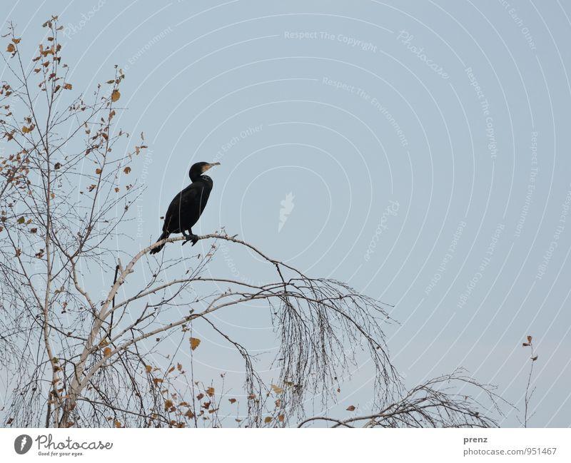 Nature Tree Animal Black Environment Autumn Gray Bird Wild animal Cormorant