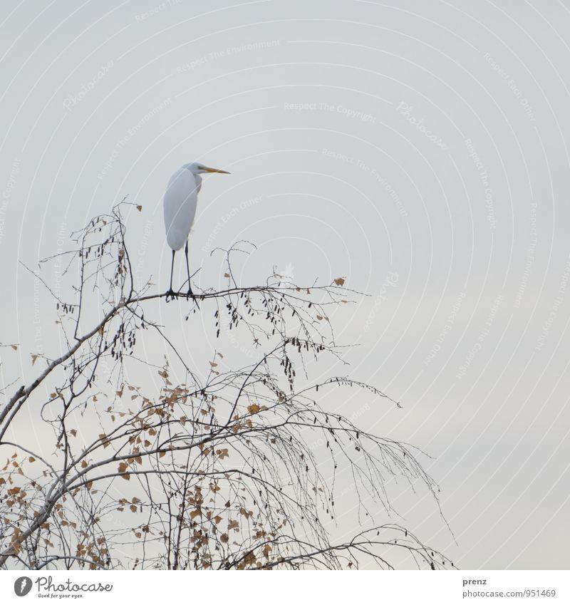 Nature White Tree Animal Environment Autumn Gray Bird Wild animal Heron Great egret Stork village Linum