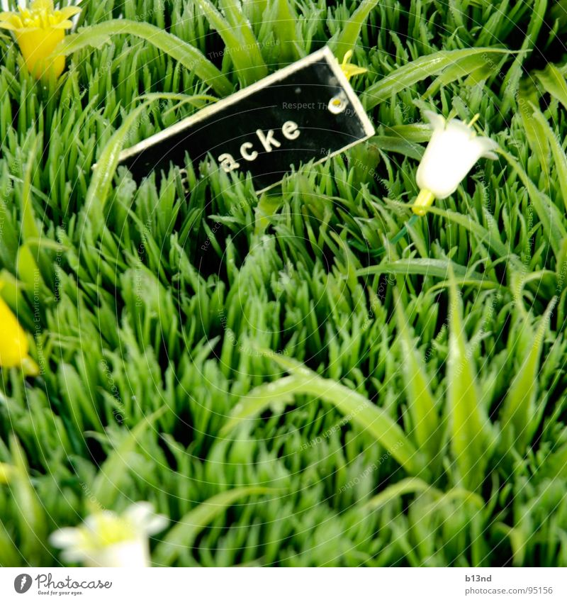 *ack Meadow Grass Flower Blossom Name plate Green Black White Yellow Still Life Spring Lawn Plant Signs and labeling Statue Plastic Placed Kitsch Old