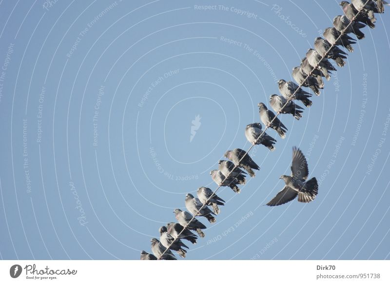 Stragglers, outsiders? Technology Energy industry Cloudless sky Beautiful weather Animal Wild animal Bird Pigeon House Dove Group of animals Flock Flying Sleep