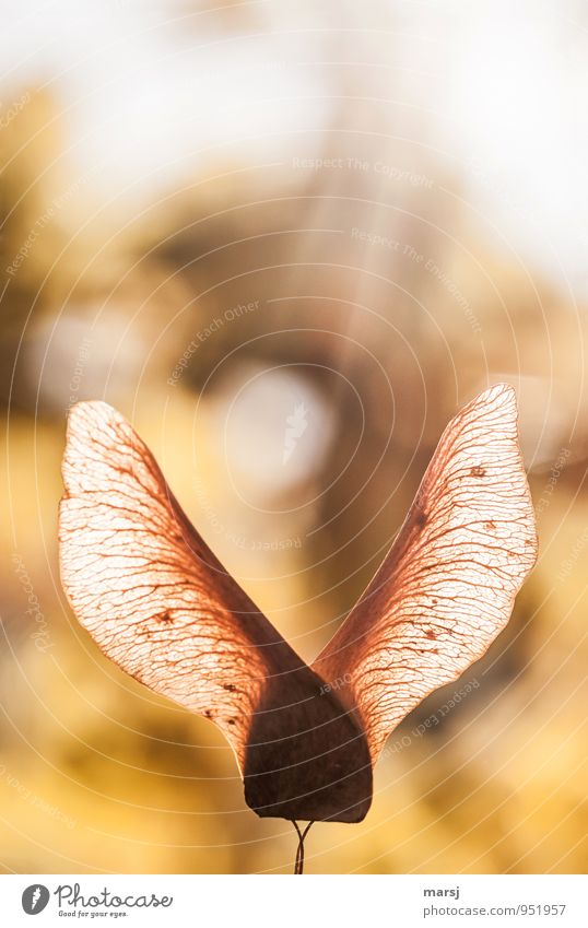 Nature Old Calm Yellow Autumn Dream Illuminate Elegant Gold Authentic Esthetic Simple Hope Seed Autumnal Dreamily