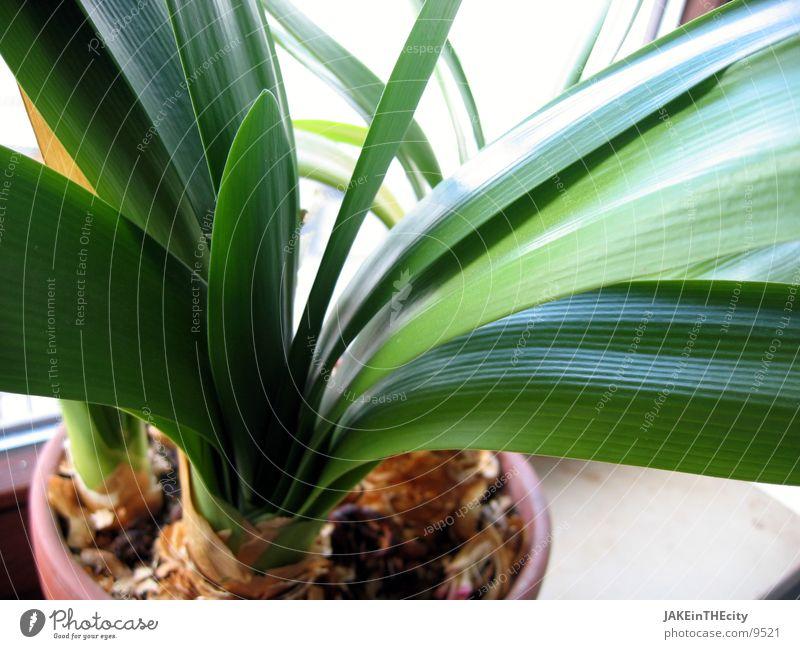 herbal_mir_one_#2 Leaf Plant Balcony plant Houseplant Root Earth green leaves flower tub plant tub