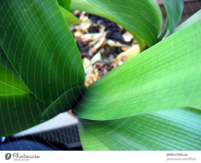 Plant Leaf Earth Root Houseplant Pot plant Balcony plant