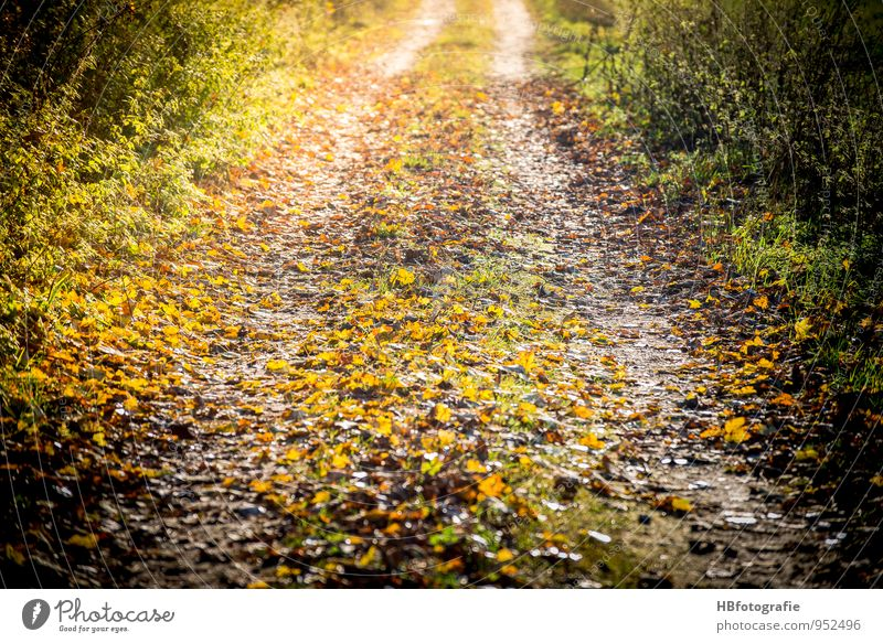 Way to Somewhere Environment Nature Landscape Sun Sunlight Autumn Beautiful weather Foliage plant Forest Movement Walking Yellow Gold Emotions