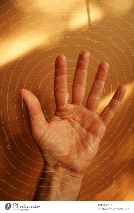 Human being Hand Fingers Communicate Stop Concentrate 5 Thumb Hold Gesture Fist Wave Salutation Numbers Forefinger Parts of body