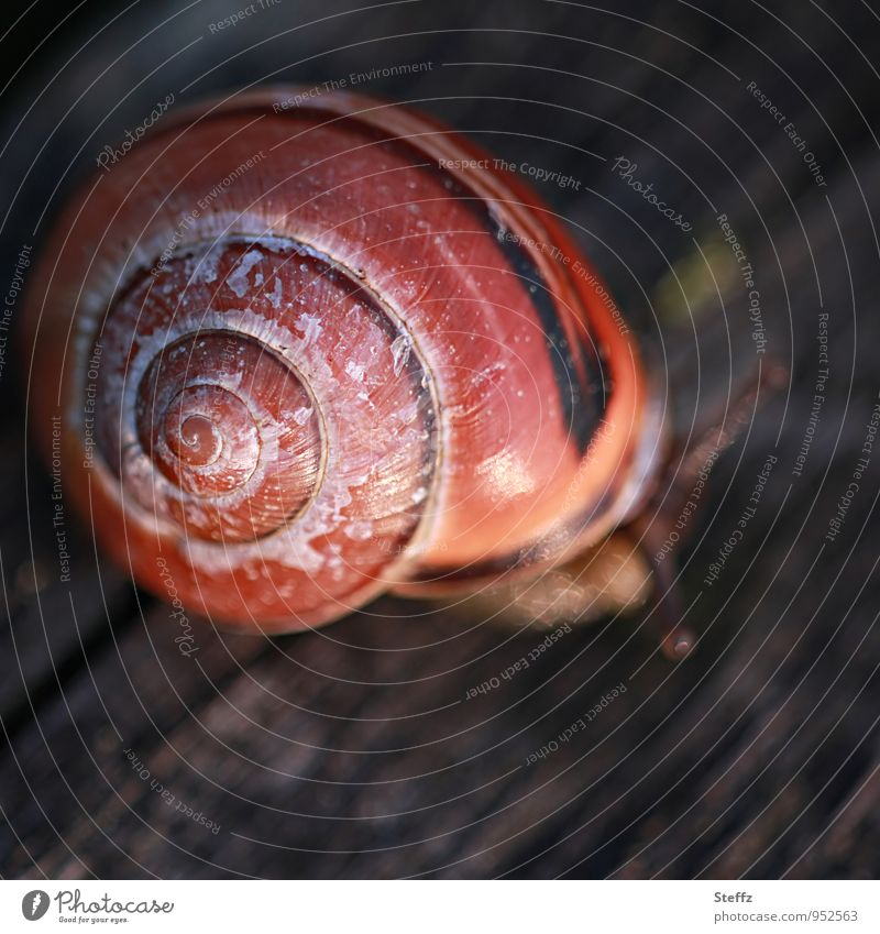 little snail in the corner Crumpet Snail shell Spiral Symmetry natural symmetry symmetry of nature symmetrical shape symmetrical structure afternoon light