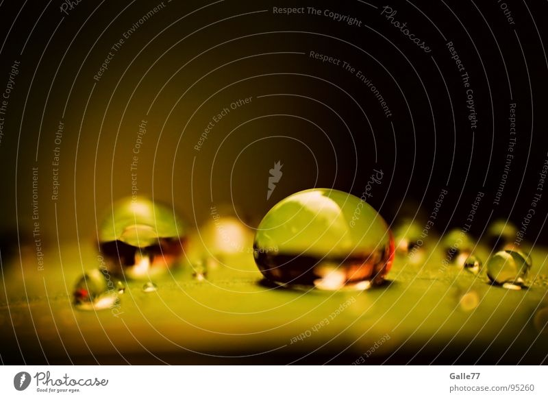 Nature Green Water Rain Drops of water Electricity Wet Round Near Crystal structure Damp