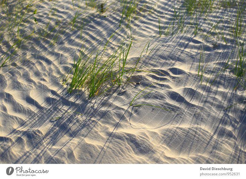 Small stalks = large shade Vacation & Travel Summer vacation Nature Landscape Plant Animal Sand Sunrise Sunset Beautiful weather Grass Foliage plant Beach