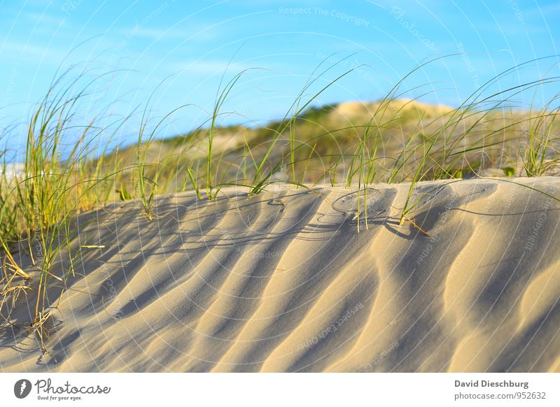 dune landscape Vacation & Travel Summer vacation Landscape Sand Sky Sunrise Sunset Beautiful weather Plant Grass Foliage plant Beach Desert Oasis Blue Yellow