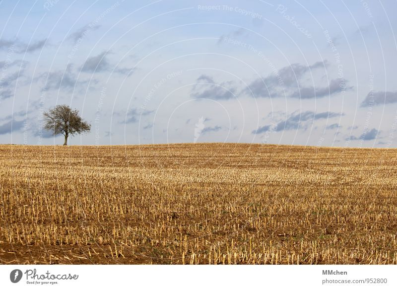 blonde Meditation Trip Freedom Nature Landscape Earth Sky Clouds Autumn Tree Agricultural crop Field Growth Wait Gloomy Blue Yellow Trust Diligent Serene Idyll