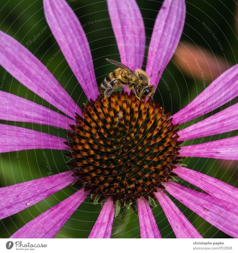 Bees, flowers - you know the story Nature Plant Spring Summer Flower Blossom Foliage plant Agricultural crop Wild plant Animal Wild animal 1 Flying Crawl