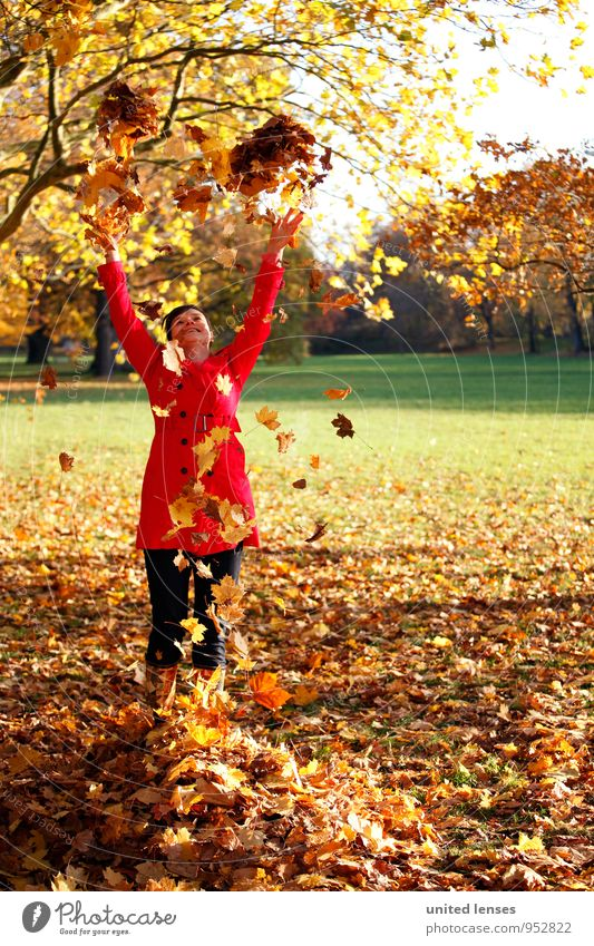 AK# Autumn joy Art Esthetic Contentment Joy Comical Autumnal Autumn leaves Autumnal colours Early fall Autumnal weather Automn wood Autumnal landscape