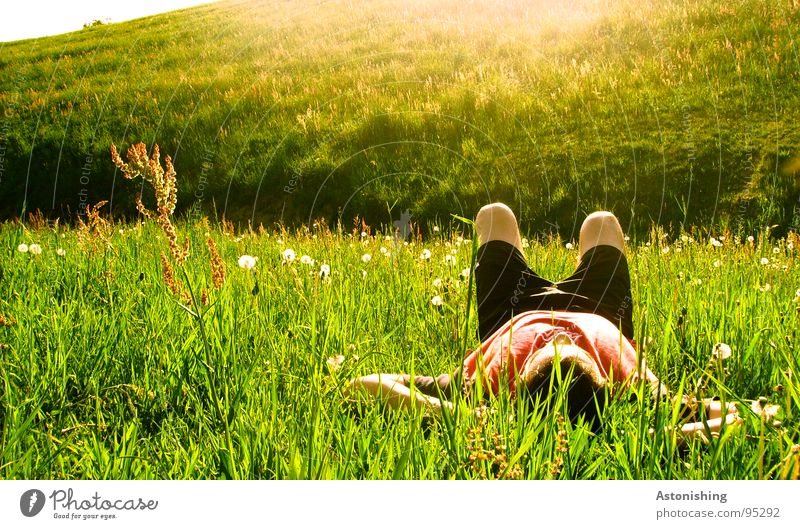 Human being Nature Green Plant Sun Summer Adults Relaxation Meadow Environment Landscape Grass Warmth Legs Moody Weather